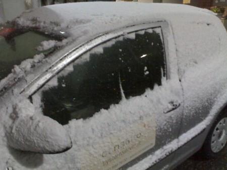 Fox mit Schnee